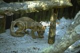 Fossa